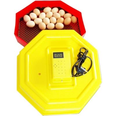 Incubator Clocitoare 60 Oua cu Termometru Digital Cleo 5T MN9051